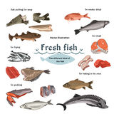 Colored Sketch Seafood Set Royalty Free Stock Photography