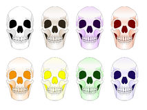 Colored Skulls Vector Illustration Stock Images