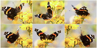 Colored small tortoiseshell butterfly Royalty Free Stock Images