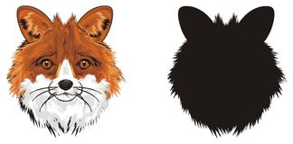 Two snouts of foxes. Colored and solid black snouts of foxes vector illustration