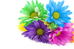 Colored Spring Daisies Royalty Free Stock Images