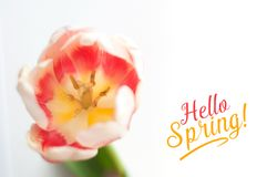 Colored spring flowers in pot on the windows stock photo