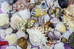 Colored stones and shells of different types of close-up. Royalty Free Stock Photography