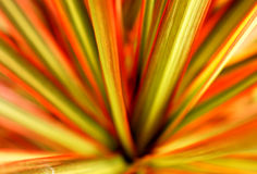 Colored Straight Leaves Royalty Free Stock Photography