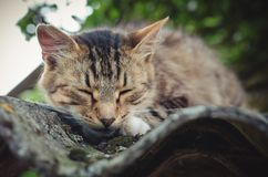 Colored tabby cat sleeping on an old roof stock photo
