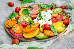 Free Colored Tomato Salad With Cheese Mozzarella And Basil. Royalty Free Stock Photo - 124150105