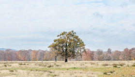 Colored tree in autumn time, Horezu Region, yellow orange leaves. Countryside blue sky Royalty Free Stock Image