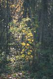Colored tree leaves lush pattern in forest with branches and sunlight in early autumn nature at countryside - vintage old film. Look royalty free stock image