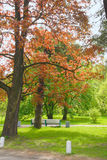 Colored tree in the park Stock Photography