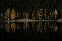 Colored tree reflection in a mountain lake. Colored forest reflection in a mountain lake,autumn forest stock photo