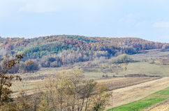 Colored trees in autumn time, Horezu Region. Yellow orange leaves, countryside blue sky Stock Images
