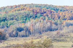 Colored trees in autumn time, Horezu Region. Yellow orange leaves, countryside blue sky Royalty Free Stock Photos