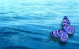 Colored tropical butterfly on a background of blue water stock image