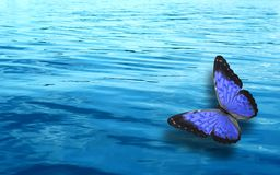 Colored tropical butterfly on a background of blue water royalty free stock photography