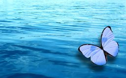 Colored tropical butterfly on a background of blue water stock images