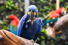 Colored Tropical Parrot Royalty Free Stock Photos