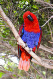 Colored Tropical Parrot Stock Image
