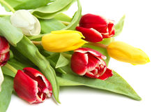 Colored tulips Stock Photo