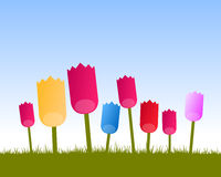Colored tulips background. Vector background with simple colored tulips, symbolic flower of netherlands, with grass field and sky Stock Image