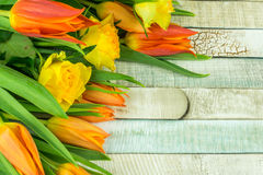 Colored tulips and gerbera flowers Royalty Free Stock Photo