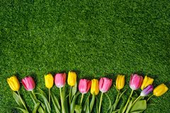 Colored tulips on green grass in the park. Stock Photo