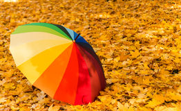 Colored umbrella in the park Royalty Free Stock Images