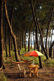 Colored umbrella under pinus tree in INDIA Royalty Free Stock Images