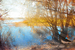 Colored utumn landscape - yellowed autumn willow under sunshine on the bank of the small river at autumn sunset. Royalty Free Stock Images