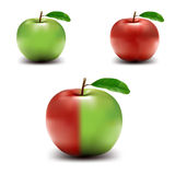 Colored Vector Apples Stock Photography