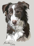 Colored vector Border collie Stock Photo