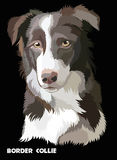 Colored vector Border collie Royalty Free Stock Image
