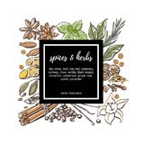 Vector illustration with spices and herbs and black label. Colored vector illustration Spices and herbs. Hand drawn sketchy doodle objects in square composition Royalty Free Stock Image