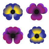Colored Violets with petels in a heart shape Stock Image