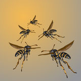 Colored wasps fly to the sun Stock Photos