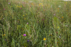 Colored wildflower meadow Stock Photo