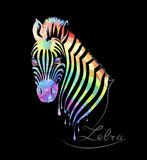 Colored zebra on black Stock Image
