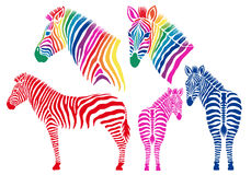 Colored zebras, vector set Stock Photos