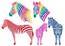 Colored zebras, vector set. Colorful zebra silhouettes, set of vector design elements Stock Photos