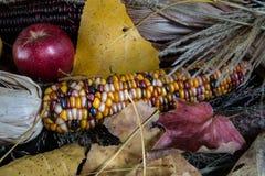 ColoredCorn Imagem de Stock Royalty Free