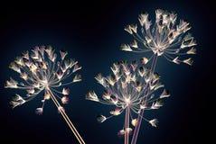 Coloree la flor de cristal aislada en el negro, el Agapanthus de Bell Imagen de archivo libre de regalías