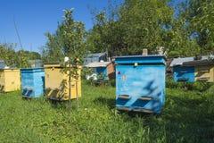 Coloree las colmenas de la abeja para colocarse de lado a lado en el campo Fotografía de archivo
