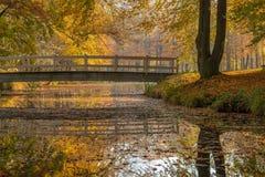 Colores amarillos del otoño en árboles en el parque Fotografía de archivo libre de regalías