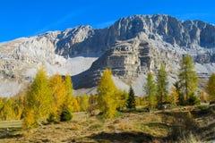 Colores amarillos hermosos del otoño en las montañas Dolomiti di Brenta, Italia imágenes de archivo libres de regalías