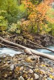 Colores americanos de la caída del barranco de la bifurcación Fotografía de archivo