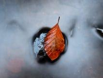 Colores anaranjados del otoño en agua La hoja de la haya de la muerte pone en piedra en corriente de la montaña Imágenes de archivo libres de regalías