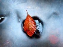 Colores anaranjados del otoño en agua La hoja de la haya de la muerte pone en piedra en corriente de la montaña Fotos de archivo