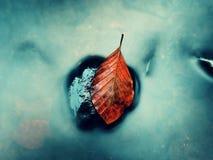 Colores anaranjados del otoño en agua La hoja de la haya de la muerte pone en piedra en corriente de la montaña Imagen de archivo libre de regalías