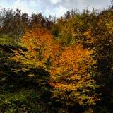Colores ardientes de árboles en otoño imagen de archivo libre de regalías