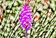 Colores brillantes de la primavera imagenes de archivo