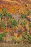Colores brillantes del bosque del otoño del lavabo del río Amur Imágenes de archivo libres de regalías